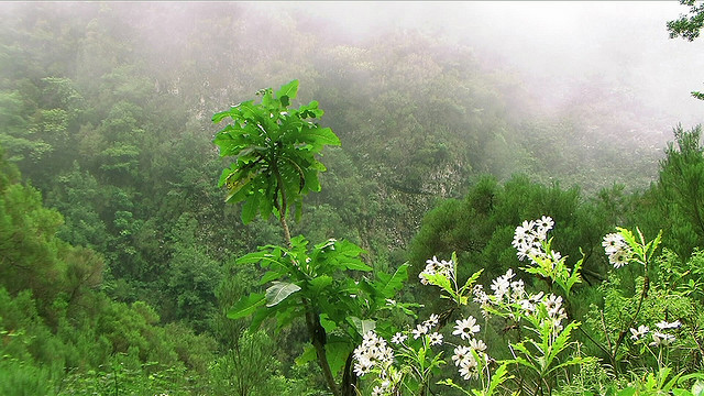 The Laurissilva Forest, Madeira Nature Park| Madeira Island (Portugal)- Travel Europe Guide