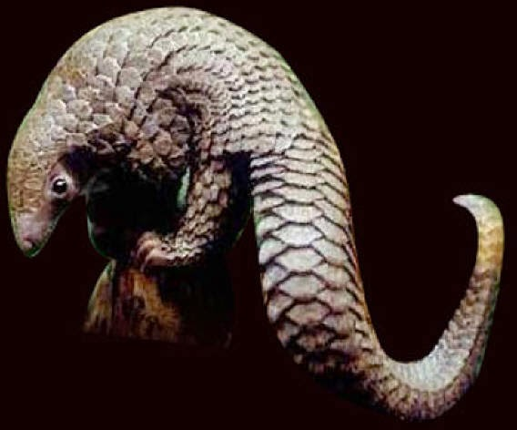 http://zoozon.blogspot.com/2014/12/gambar-4-hewan-trenggiling-pangilon.html