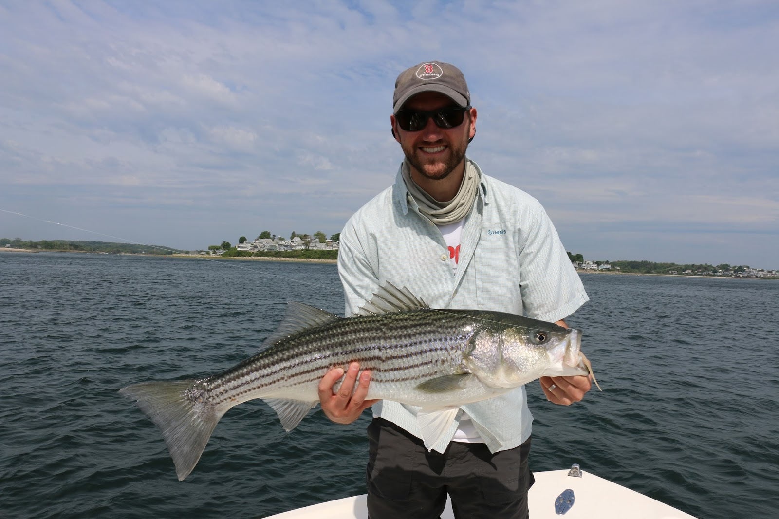 Boston fly fishing and report spring striped bass report 2015 for Spring bass fishing