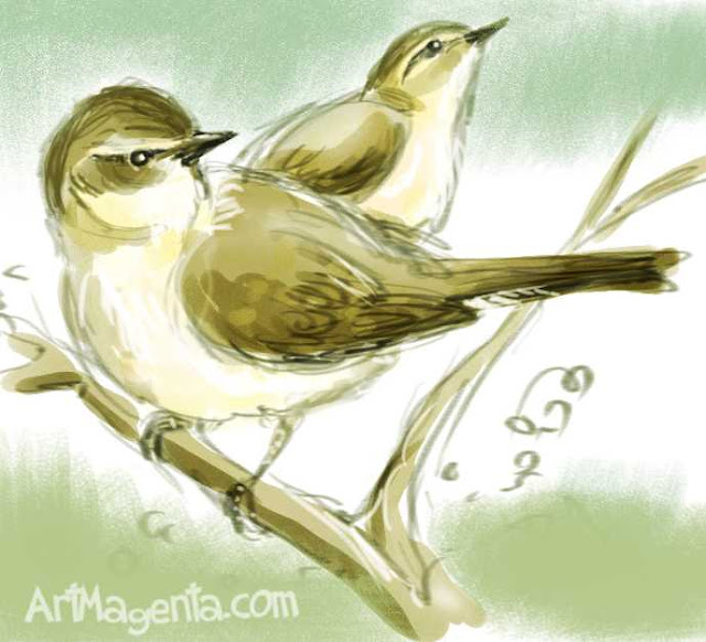 Chiffchaff is a bird drawing by ArtMagenta