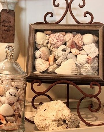 shell collection shadow box