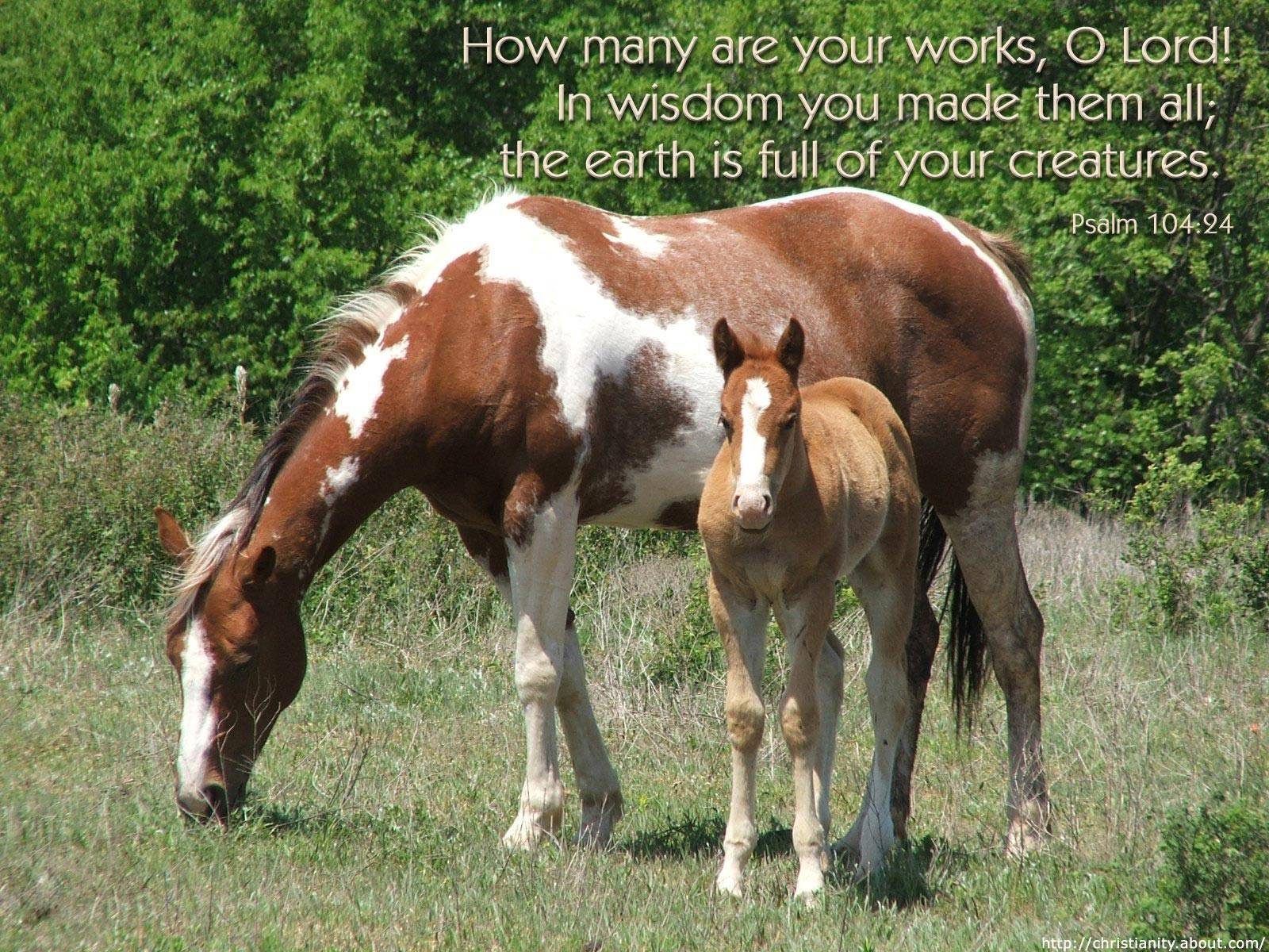 Beautiful   Wallpaper Horse Bible Verse - christian+wallpapers  Perfect Image Reference_17112.jpg