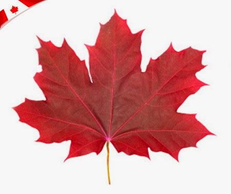 The Origin Of The Maple Leaf A Canadian Symbol Diego Braghi