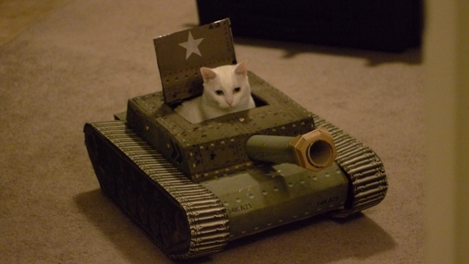 tank cats after effects animation tysonw com