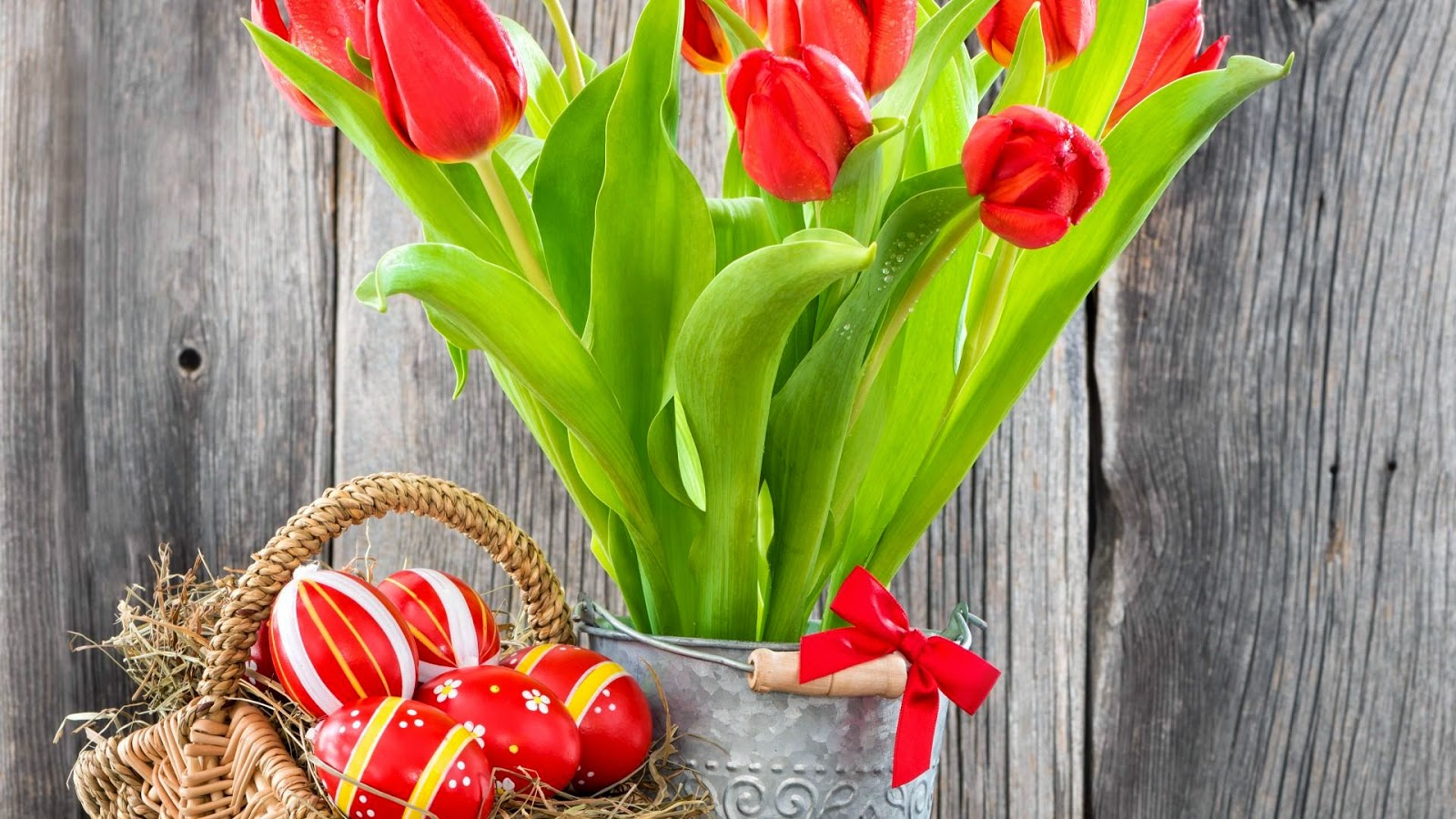 Lovely red tulips
