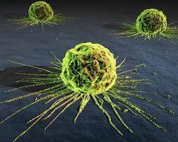 penyakit kanker, obat kanker, obat kanker alami, penyebab kanker, mencegah kanker
