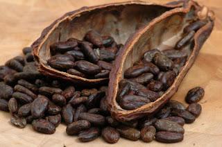 بذور الكاكاو