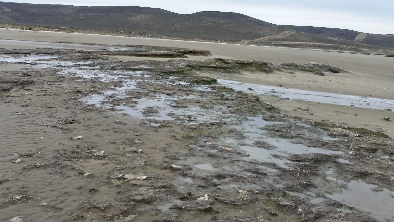 Zona costera donde se obtienen las algas