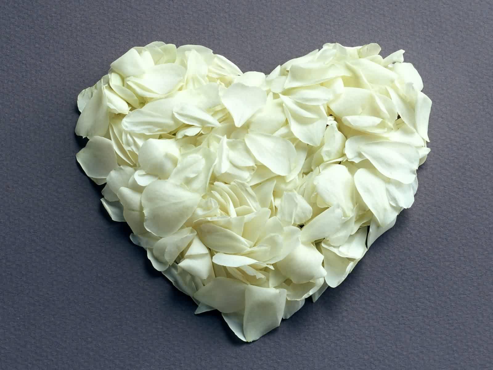 Valentine White Rose Flower Wallpaper