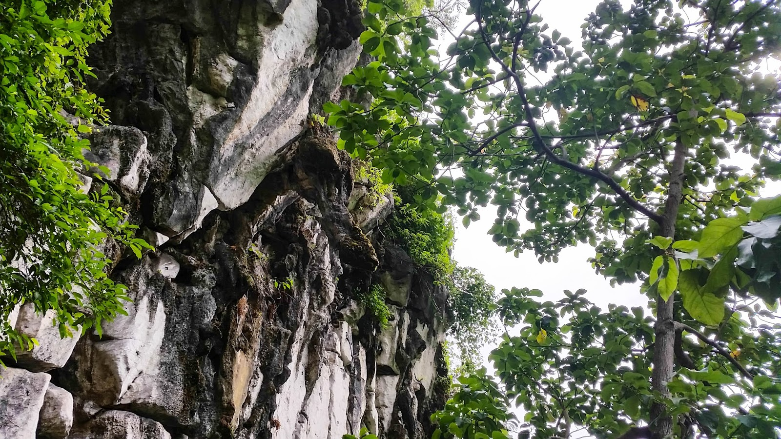 the experience of rock climbing shared Hcrp rock climbing programs and camps shared septic climb to new heights as you experience the basics of rock climbing in this beginner class.