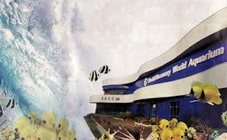 Самый большой океанариум в России