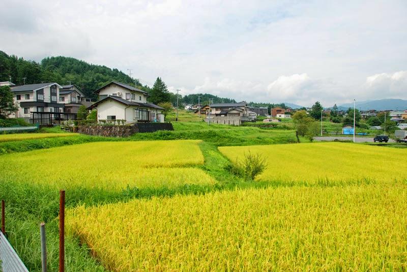 Viaggio in giappone le case dai tetti di paglia di takayama for Tetti giapponesi