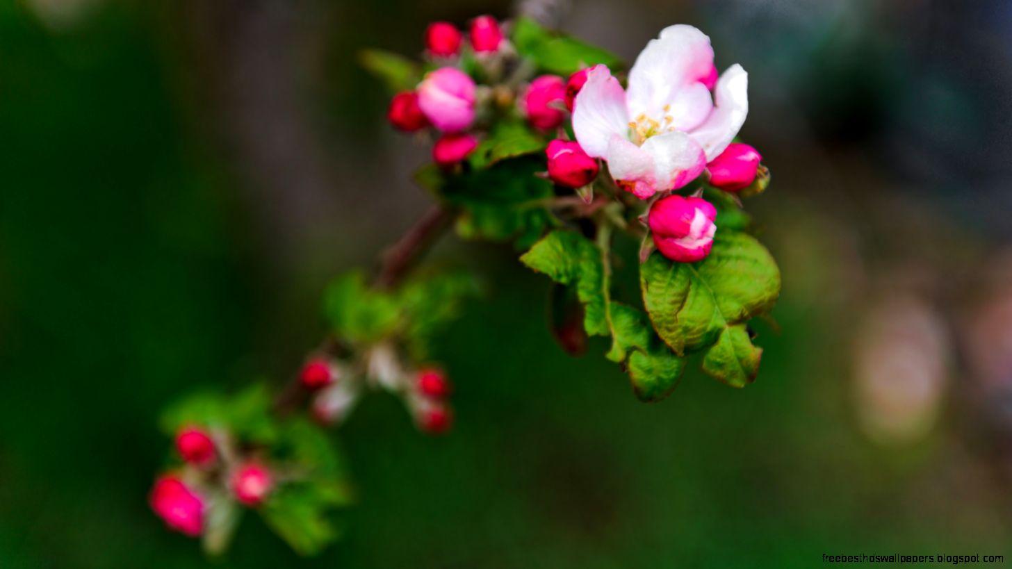 spring flowers screensavers - photo #7