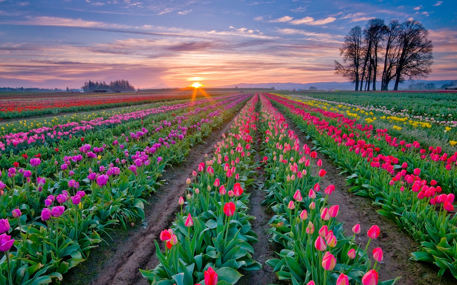 Most Beautiful And Best Flower Fields In The World Part