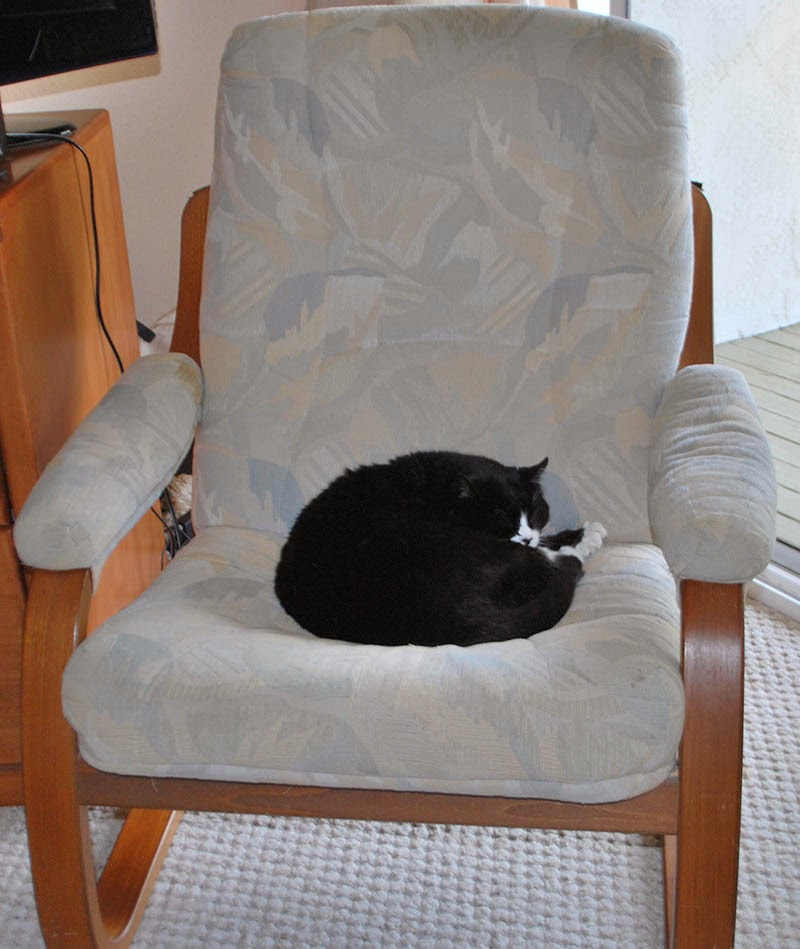 The Scratching Post The Solution Is Obvious Buy Another Reading Chair