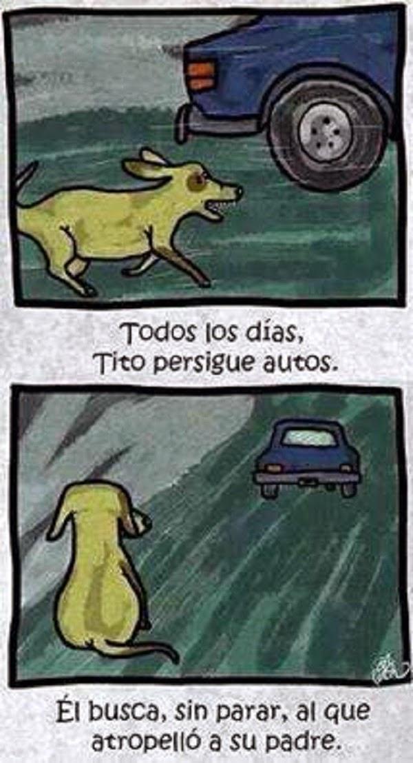 Tito persigue perros