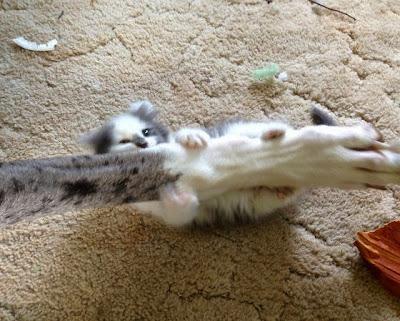 foto Tinycat dan Zeus 03
