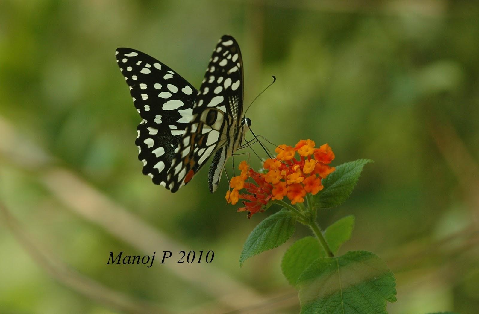 My Butterfly Garden: L...