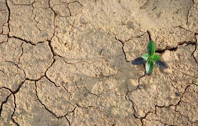 Akibat dan Dampak Pencemaran Tanah