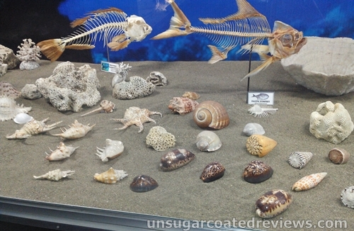 fish skeletons and shells