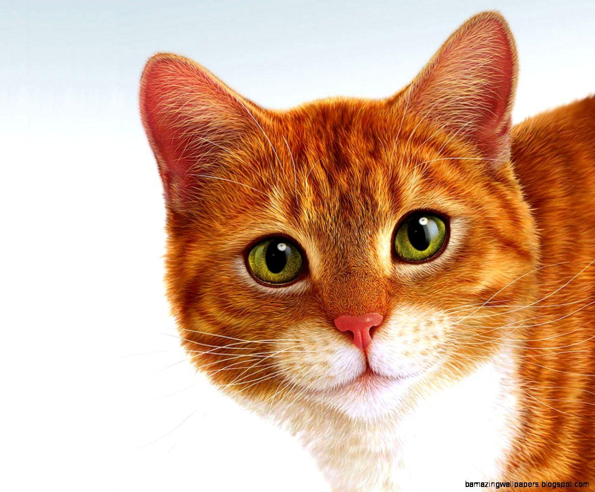 Download Apple Mac Cat Face Like Angel Soul Wallpaper 1280x1024