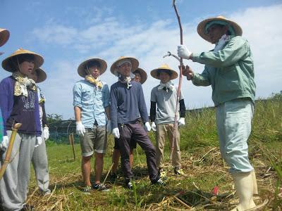 体験/観光 農業体験 サトウキビ
