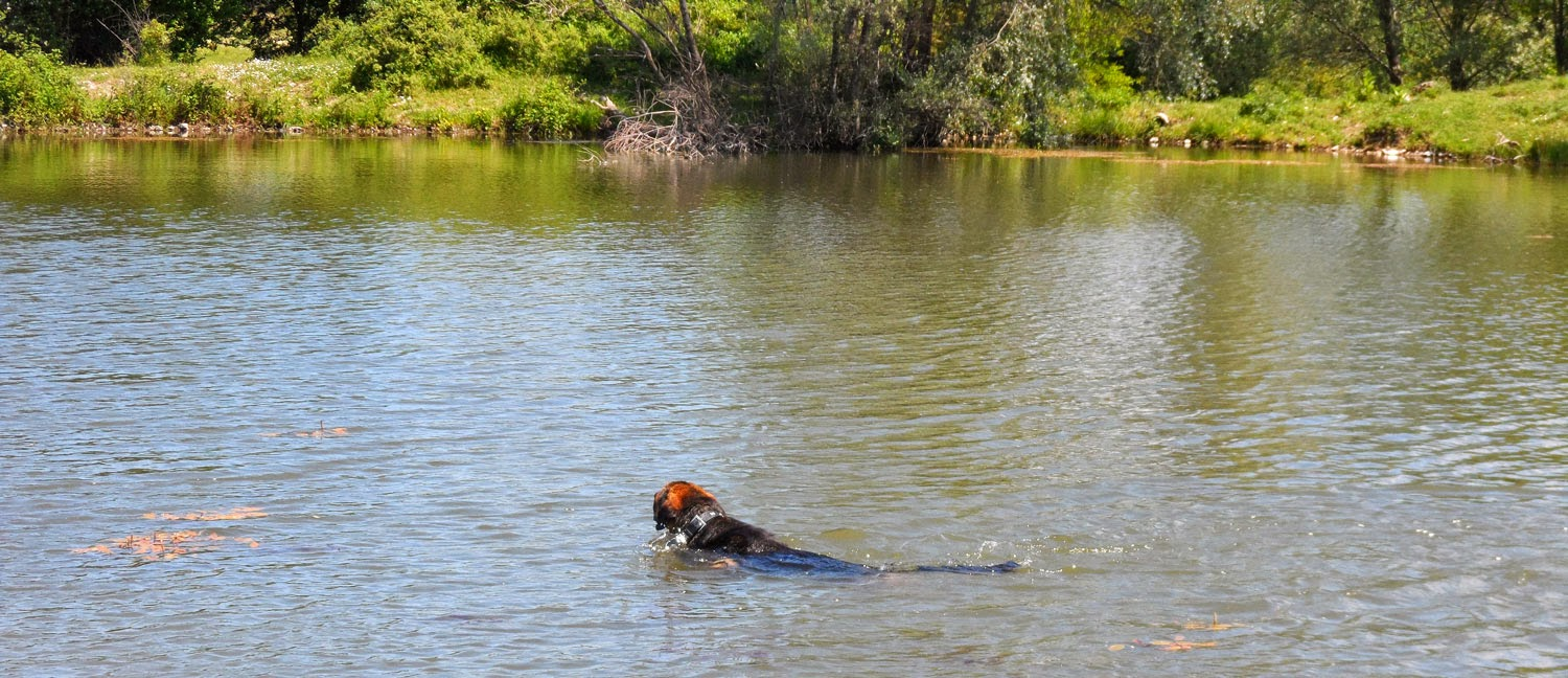 He is such a water-dog