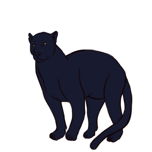how to draw a black panther animal step by step