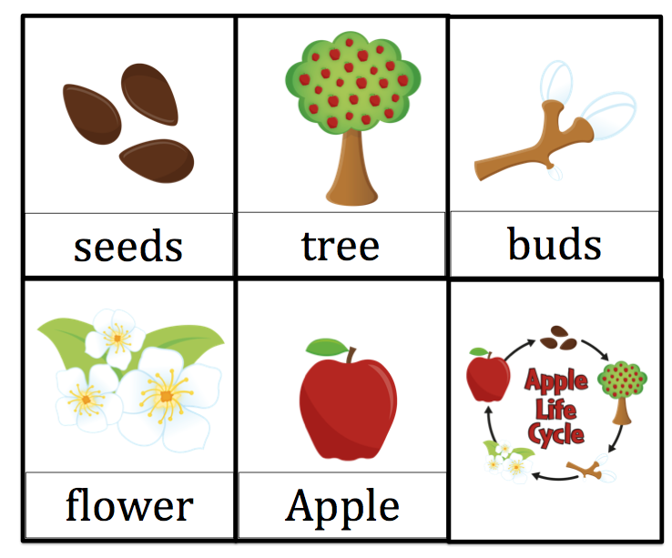Versatile image in apple life cycle printable