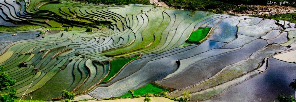 hình nền ruộng lúa bậc thang đẹp