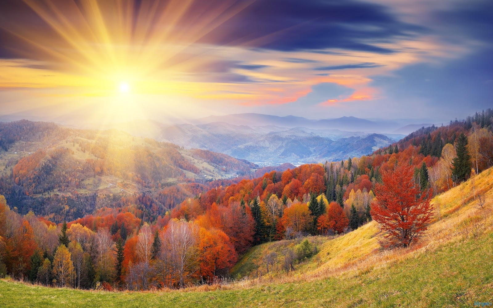 : Download Autumn Forest Sunrise Wallpaper, Autumn Forest Sunrise