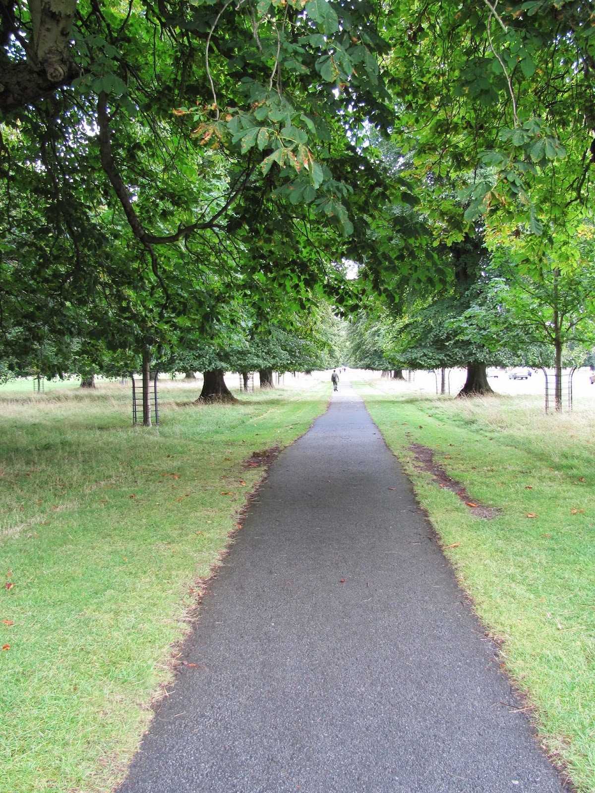 A long path vanishes in the distance at Phoenix Park, Dublin, Ireland