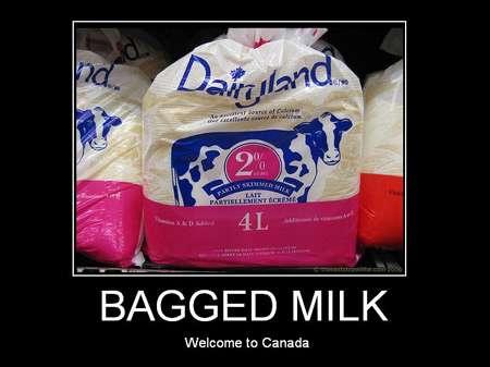 Bag Milk3