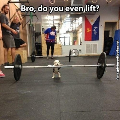 Do You Even Lift Bro Meme Dog Mens Humor Puppy Gym Weights Funny