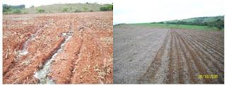 Foto comparando preparo de solo em sistema convencional (A) e sistema de plantio direto (B).