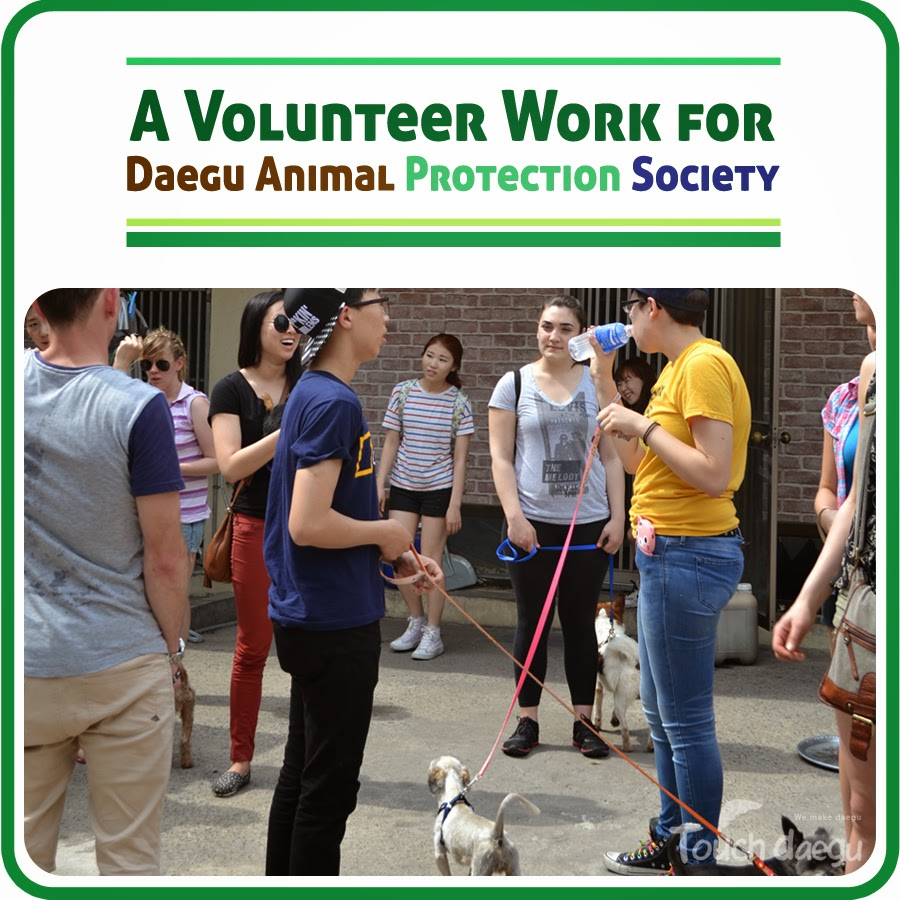 The picture indicates a volunteer work for dog work program in Daegu