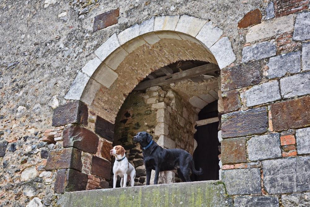 chiens dans le chateau de bethun