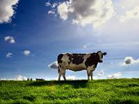 Rukun Penyembelihan Hewan dan Tata Cara Menyembelih