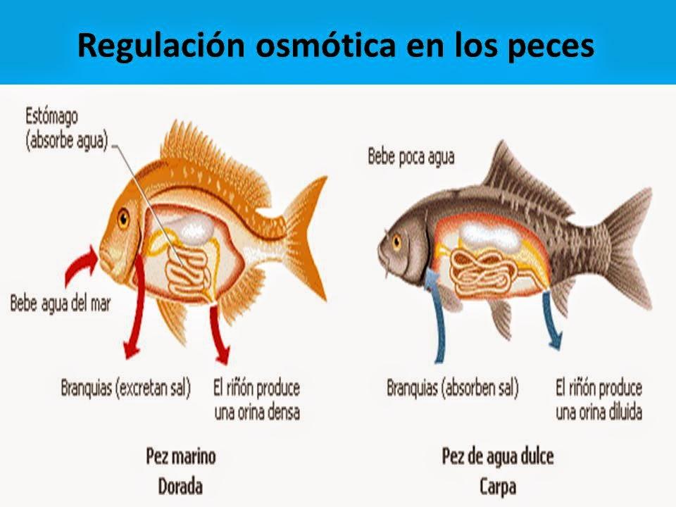 Info animales: RESPIRACIÓN CIRCULACIÓN EXCRECIÓN OLFATO Y GUSTO DE ...