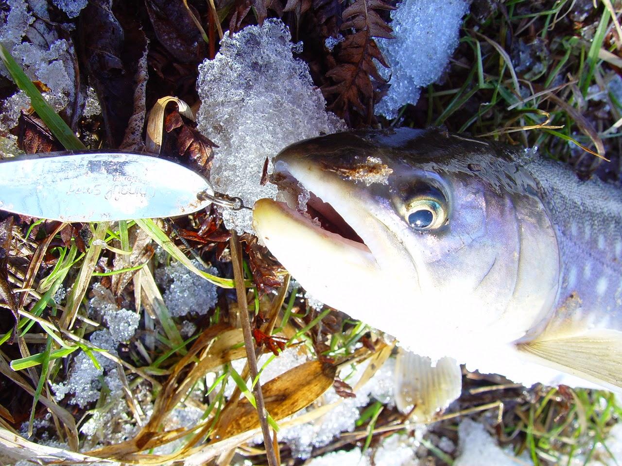 釧路川のアメマス釣り