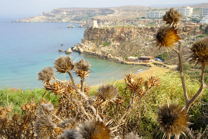 ghajn tuffieha beach hike malta