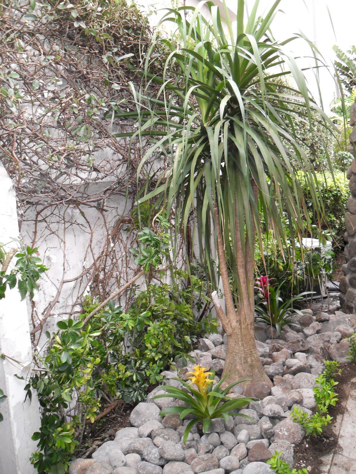 Mantenimiento y dise o de jardines jardin seco - Jardines con poco mantenimiento ...