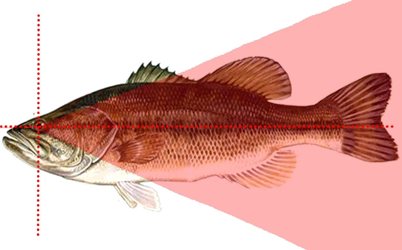 Do your fish need spectacles ? [Archive] - Cyphos.com