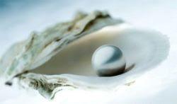 pérolas e ostras