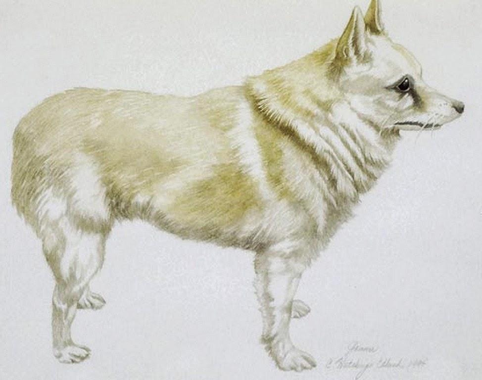 retratos-perros-hechos-con-lapiz