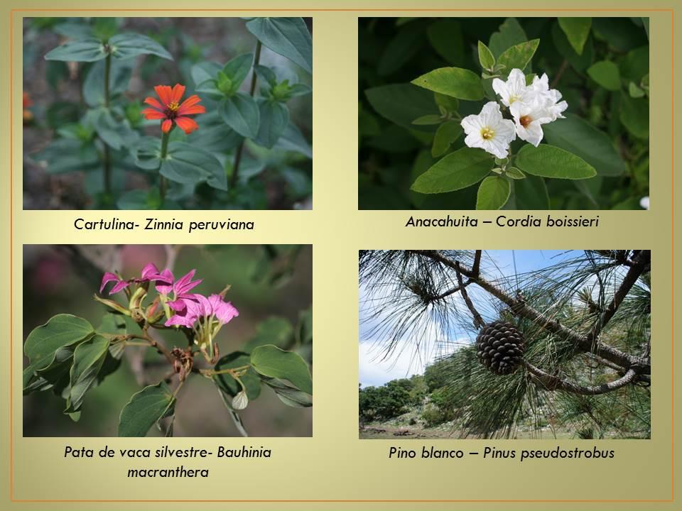 Plantas ornamentales y nativas que se encuentran en la Nombres de plantas comunes