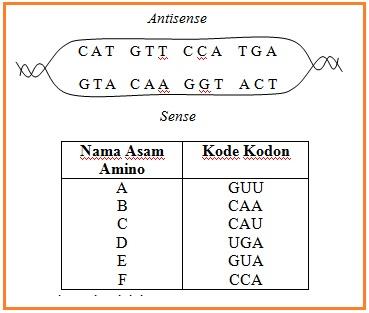 Ipa Or Science Lathan Soal Kelas Xii