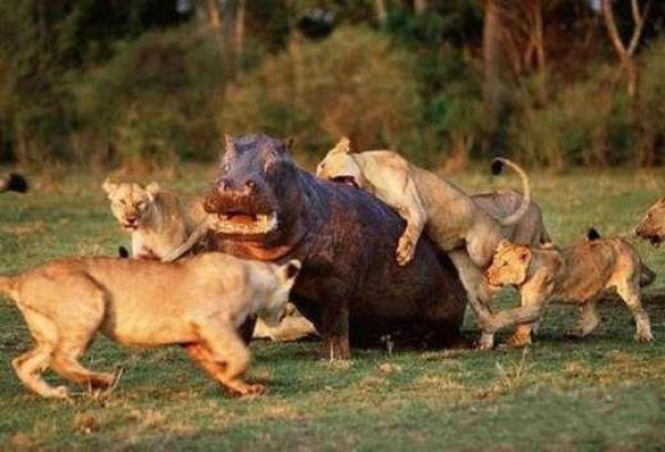 Animal Zoo Life: |Animal fight|Animal fights|Animals ...