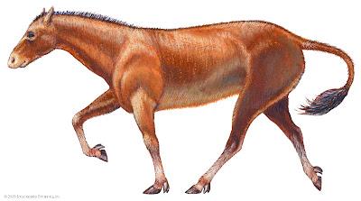 Equidae fosiles Mesohippus