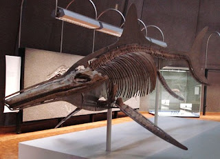 Fósil Thalattoarchon Saurophagis